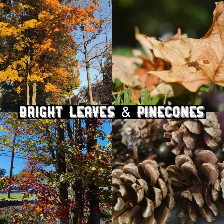 Fall 2019 Photos
