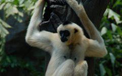 The U.S. Monkey Shortage