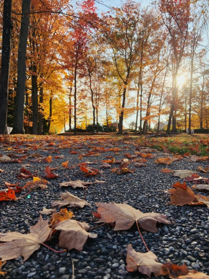 Isabelle Morse - Autumn Fall Photo