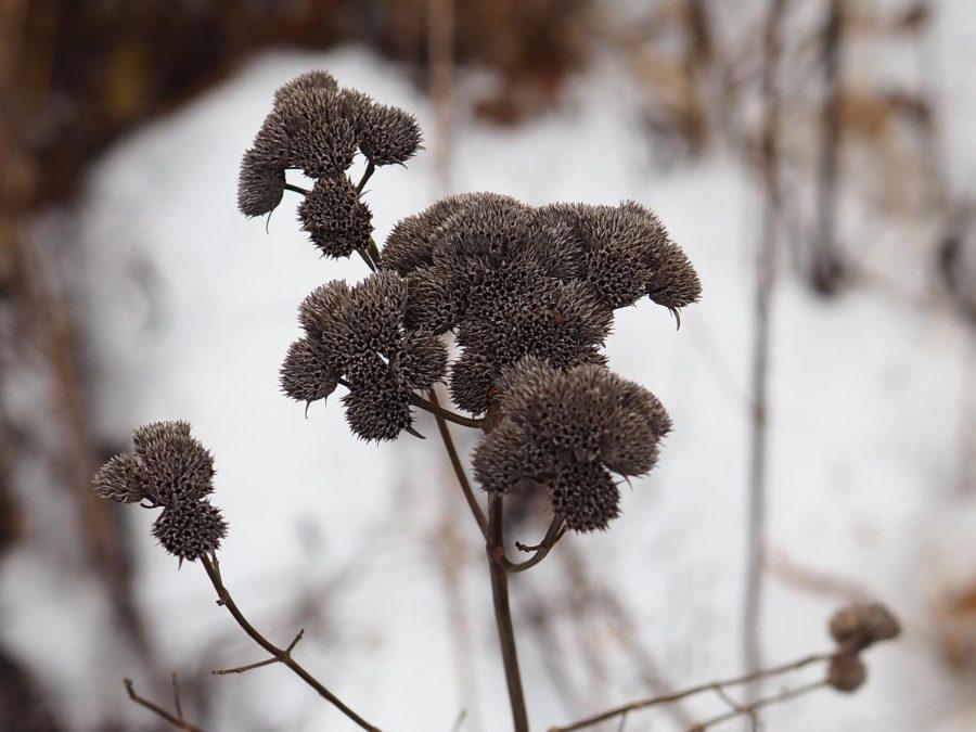 Winter Picture 4